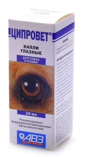Глазные капли для кошек ирис: подробности состава и применения