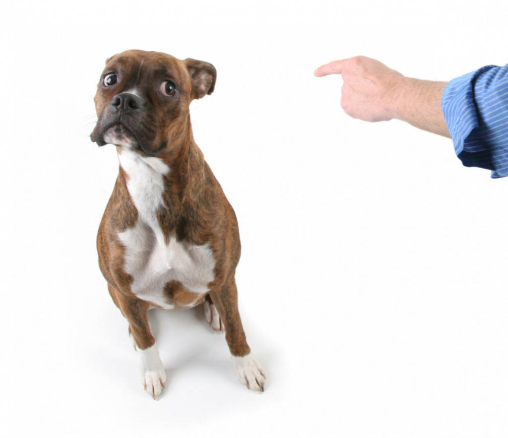 Почему собака не ест сухой корм, а другую пищу ест?