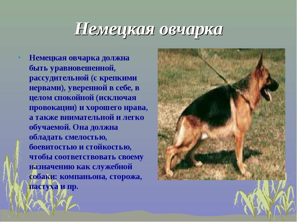 Такса: фото собаки, а также все о породе, уходе и содержании