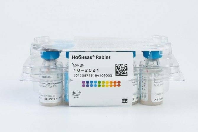Нобивак для кошек и котов: полный обзор линейки вакцин