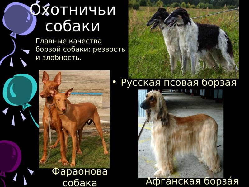 Большие породы собак