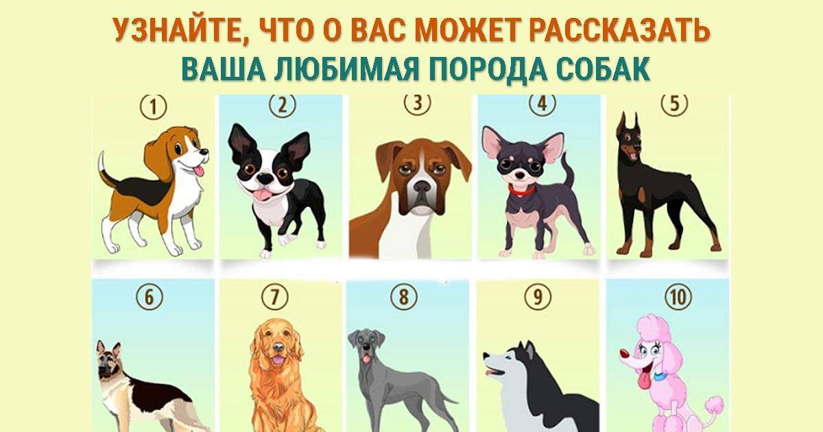 Как выбрать породу собаки по знаку зодиака