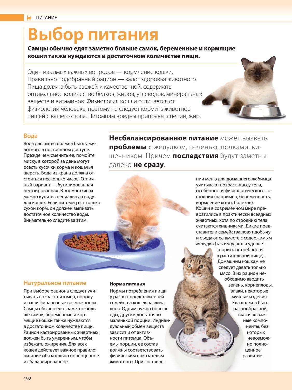 Как организовать натуральное питание для кошки: домашние рецепты корма