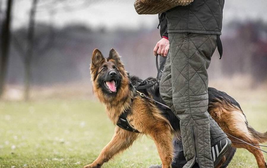 ᐉ как стать вожаком стаи, чтобы контролировать поведение своей собаки - ➡ motildazoo.ru