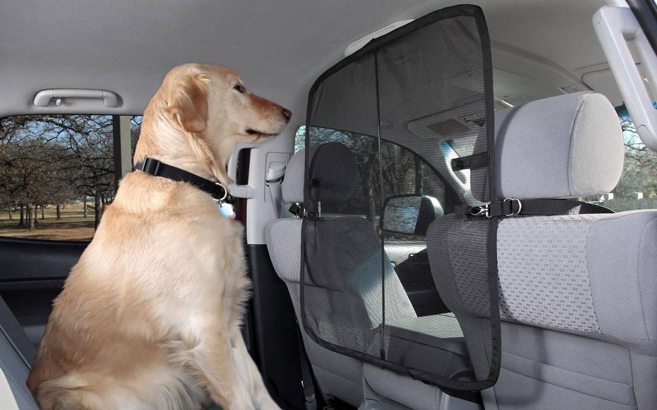 Перевозка собак в машине на дальние расстояния