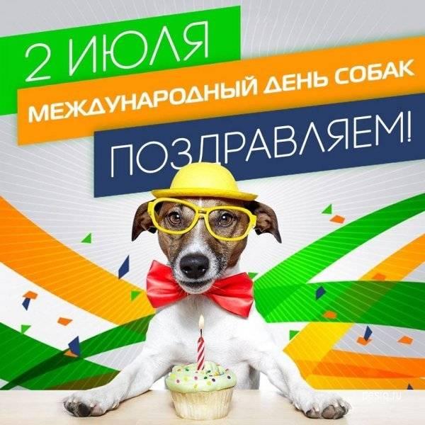 Всемирный день бездомных животных в 2019: какого числа отмечают, история праздника в 2021 году