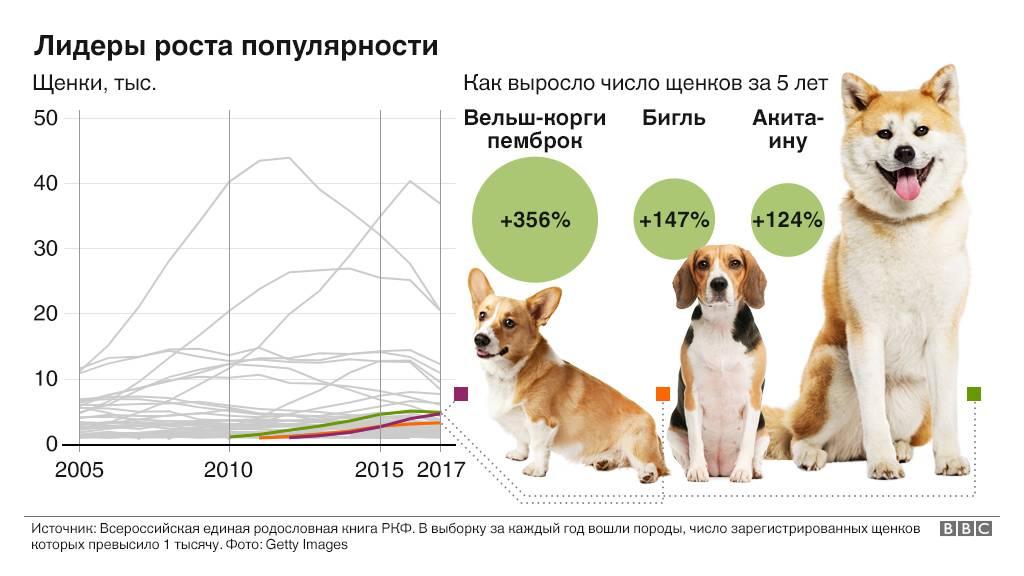 Продолжительность жизни собаки: сколько живут разные породы