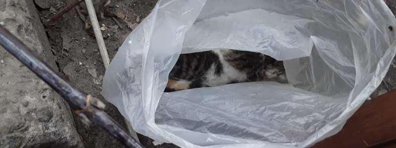 Кошка съела пакет. какие меры предпринять и возможные осложнения