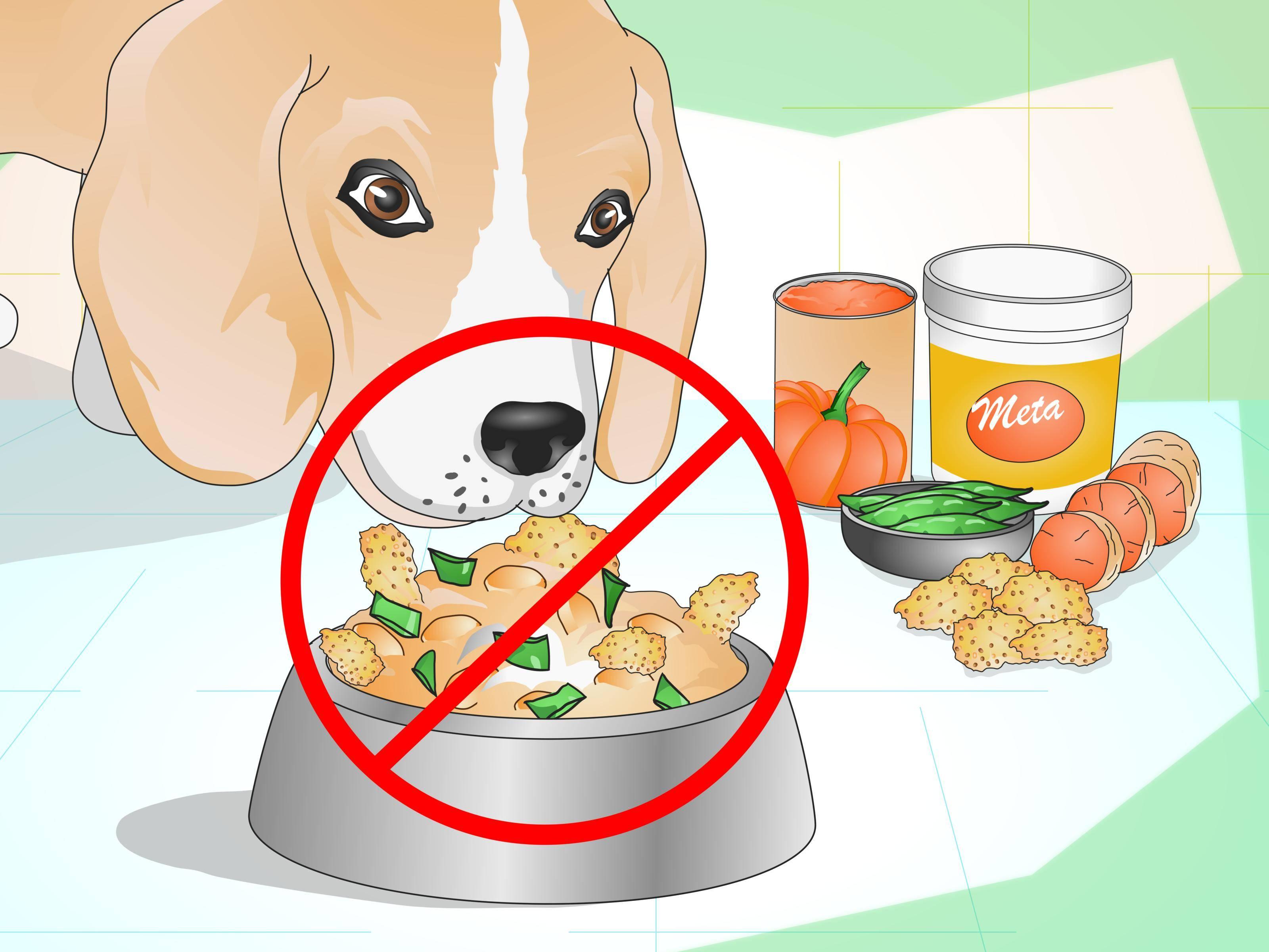 Как похудеть собаке