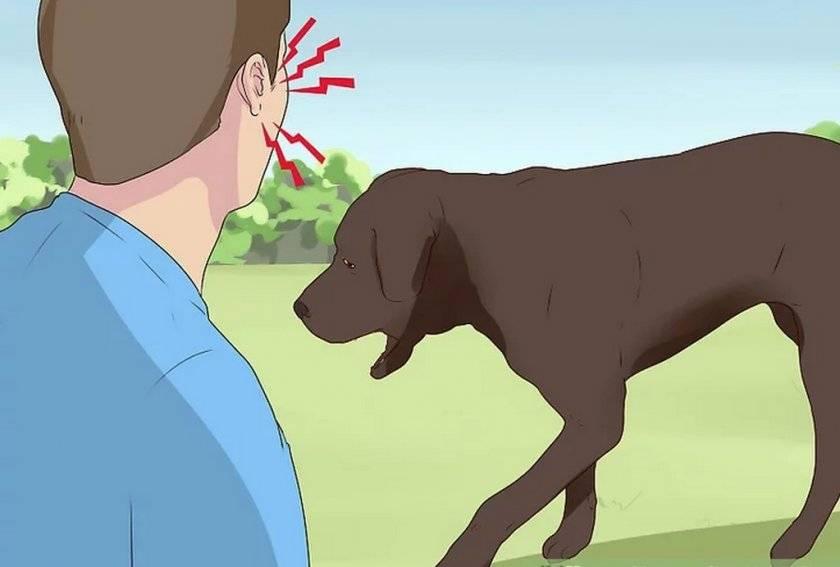Из-за чего собака может хрюкать носом?