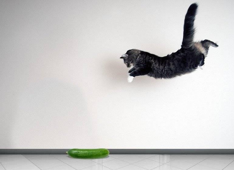 Почему коты боятся огурцов: мнение ученых фелинологов