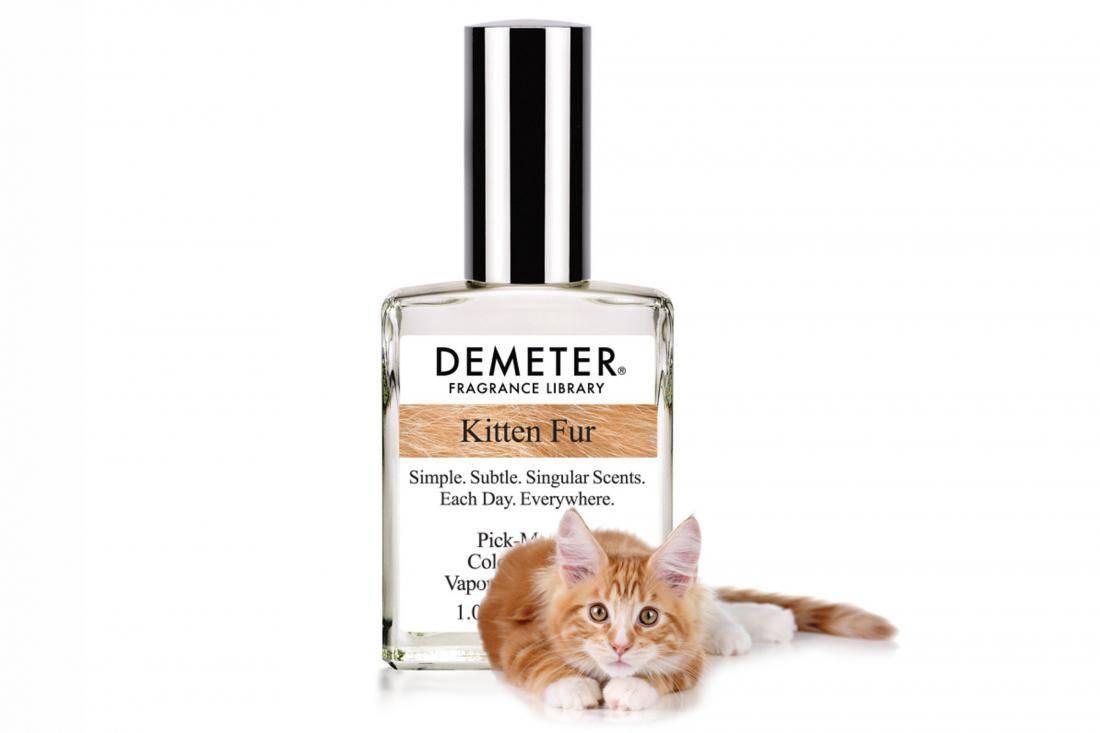 Все эти запахи отпугивают кошек и котов