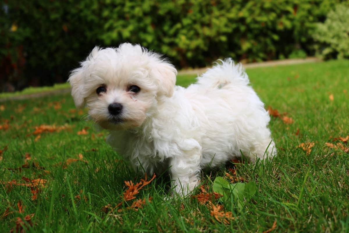 Породы маленьких собак с фото и названиями