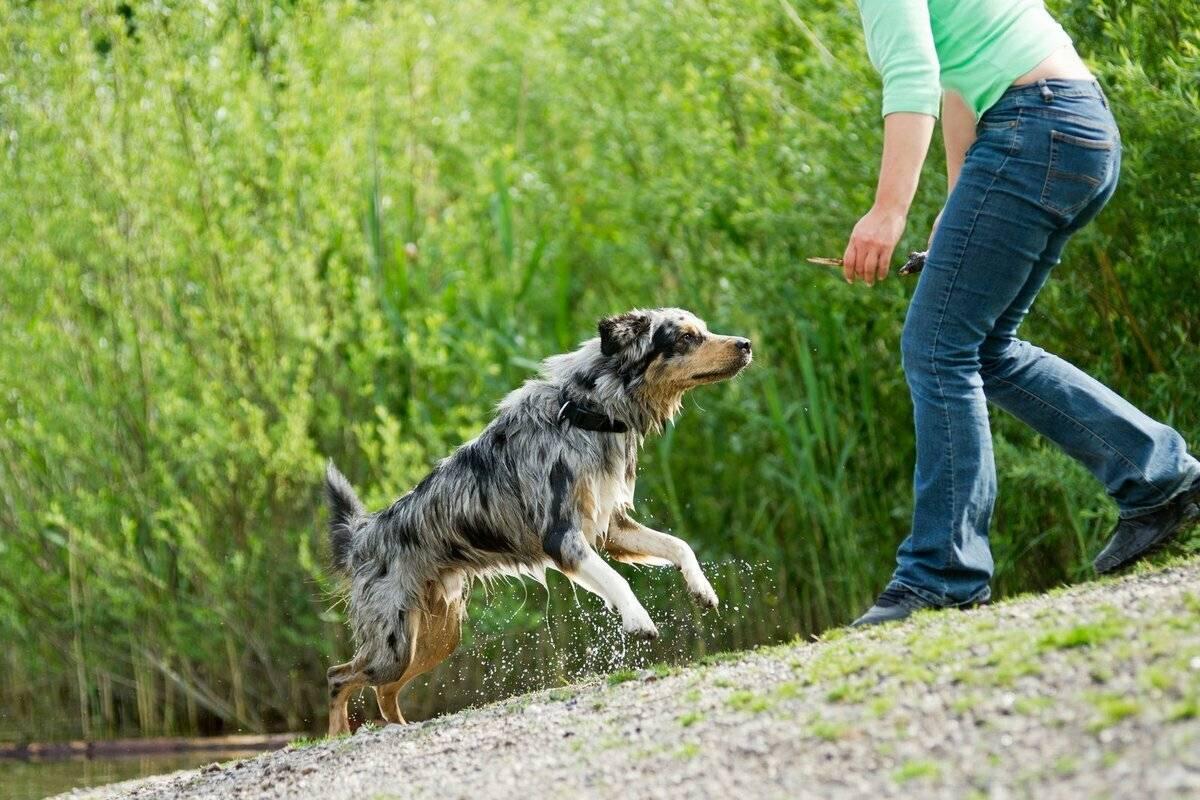 Как отучить собаку прыгать на людей при встрече: советы и способы