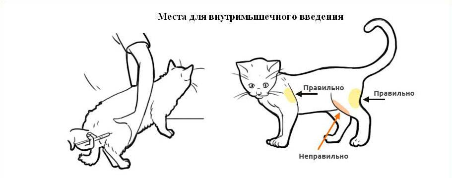 Подкожная капельница коту