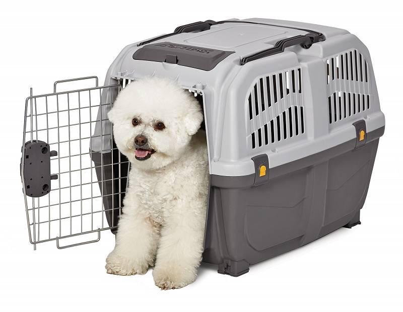 Перевозка собак в самолете: по россии, за границу, аэрофлот, s7, контейнер, клетка, документы, бокс, в салоне, стоимость, размер перевозки, маленьких, больших