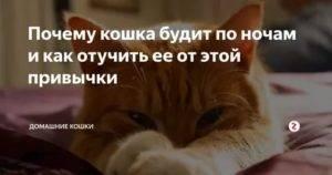 Кошка мяукает: причины и способы решения проблемы.
