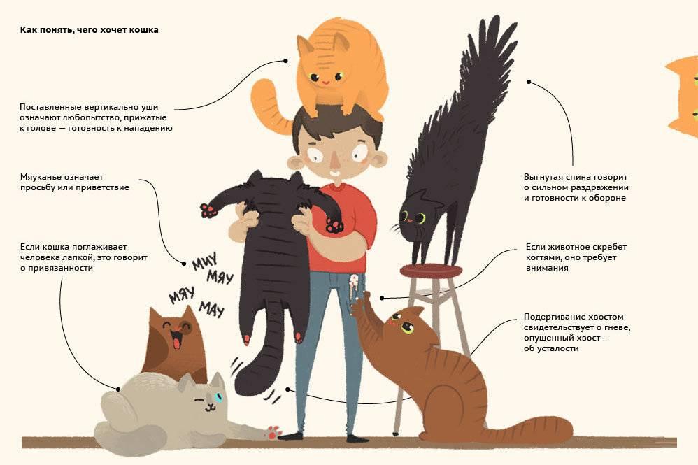 Что значат мур и мяу | как научиться понимать язык кошек