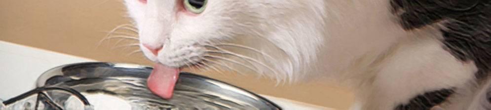 Сколько времени кошка может без корма?