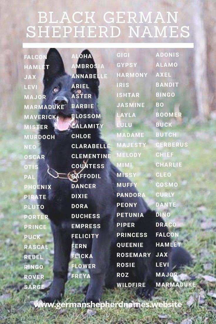 Клички для собак девочек: самые красивые, смешные, иностранные, со значением