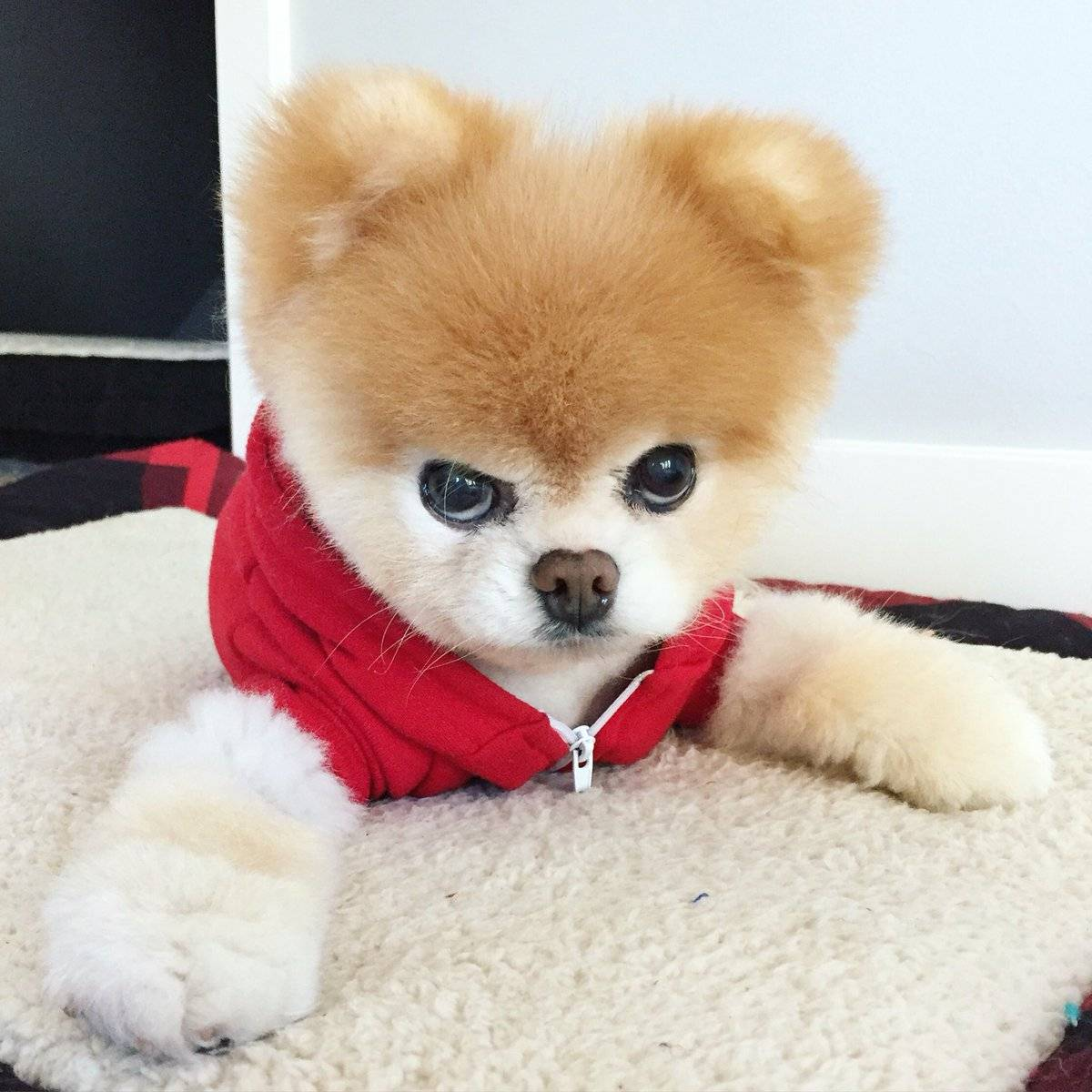 Топ 10 самые красивые породы собак в мире - лучшие топ 10