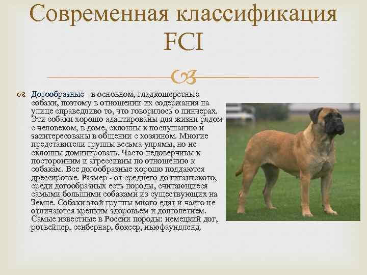 Племенной подбор собак и его связь с отбором