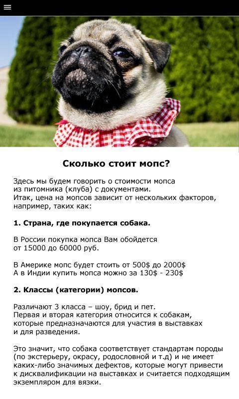Уход за мопсом: как ухаживать за мопсом в домашних условиях | собаки мира