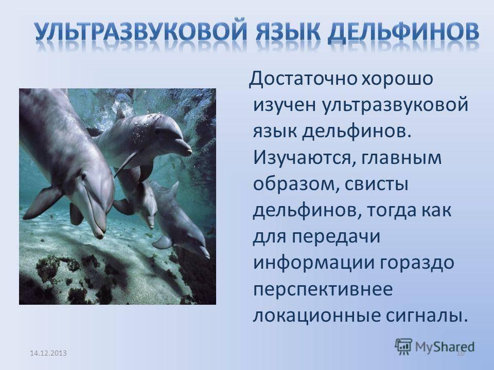 Российские ученые подобрались к разгадке языка и разума дельфинов
