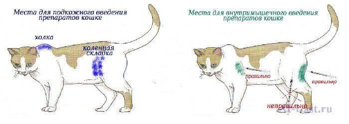 Где находится холка у кошки и кота: фото