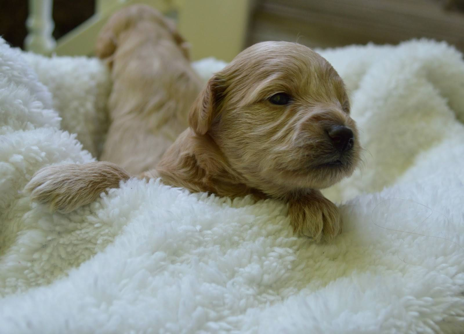 Гипоаллергенные собаки для аллергиков: список мелких, средних и крупных пород, описание, фото, видео