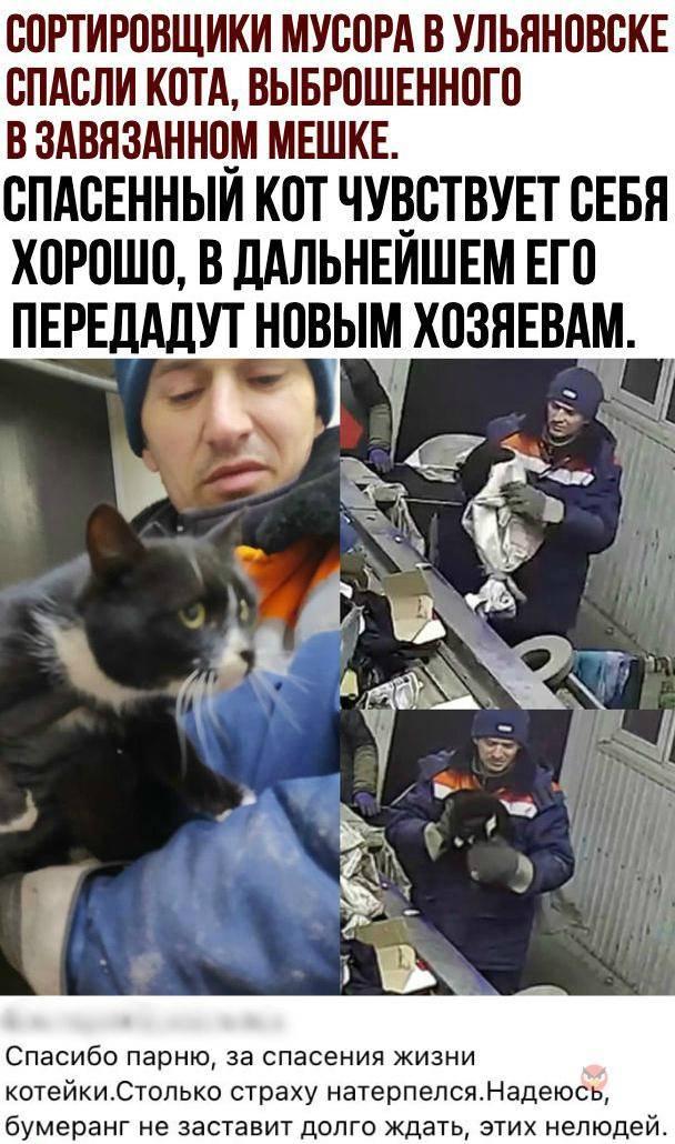 Несколько случаев о том, как кошки спасли человека