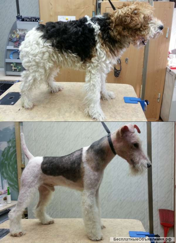 Все про выпадение шерсти у собаки