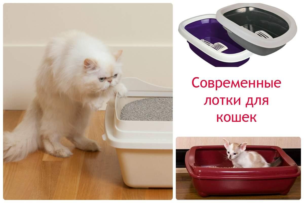 Как воспитать котенка послушным: правила кошачьего воспитания