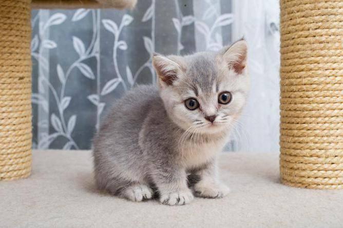 """Кот или кошка: кого выбрать лучше для квартиры и детей — """"лапы и хвост"""""""