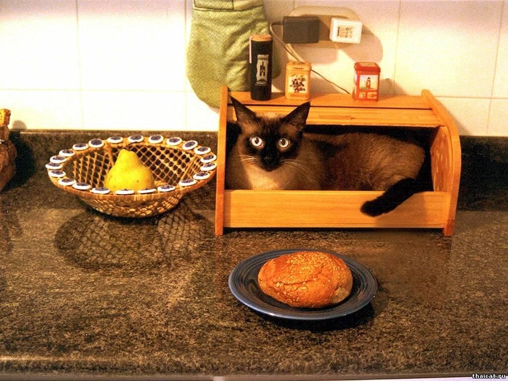 5 проверенных способов отучить кошку лазить по столу. ридус