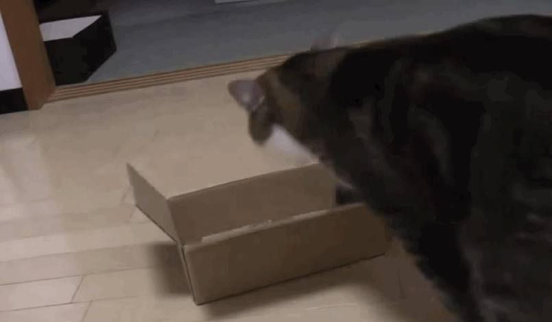 Почему кошка тащит котят в кровать. почему кошка перетаскивает котят на другое место? как она его выбирает