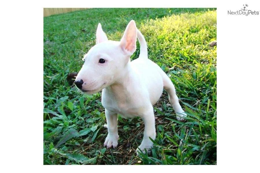 Собака с крысиной мордой — название и описание породы