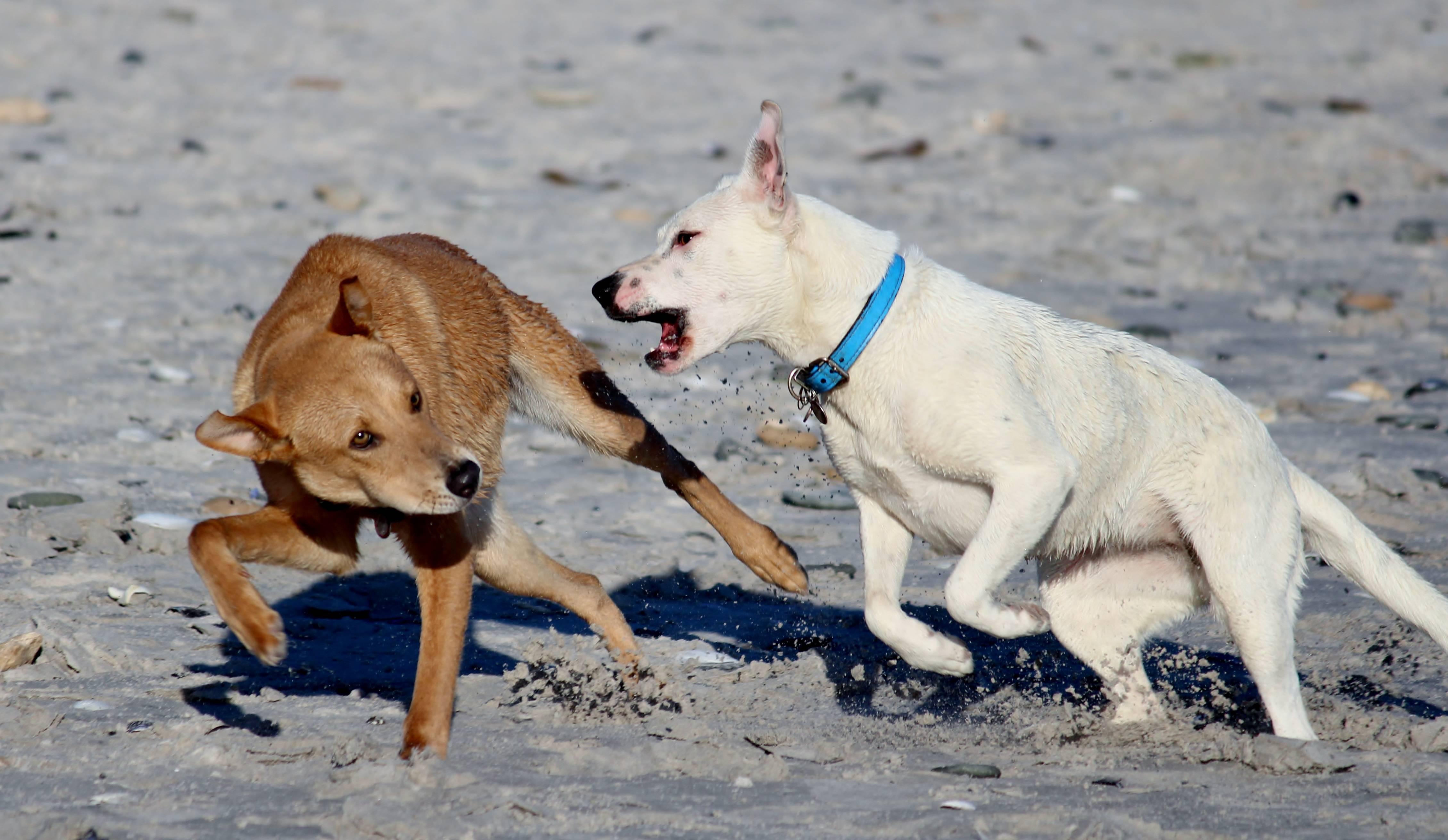 Что делать, если собака грызет свой хвост до крови? ответ на вопрос