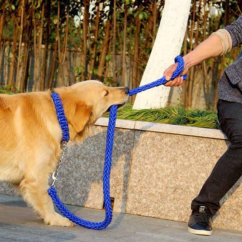 Причины, по которым собака тянет поводок, а также методы решения проблемы