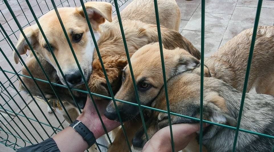 Содержание и отлов безнадзорных животных: правила, требования и особенности :: businessman.ru