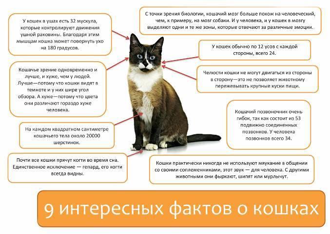 Цистит у кошек - вся правда. симптомы, причины, диагностика и профилактика цистита у кошек | caticat.ru