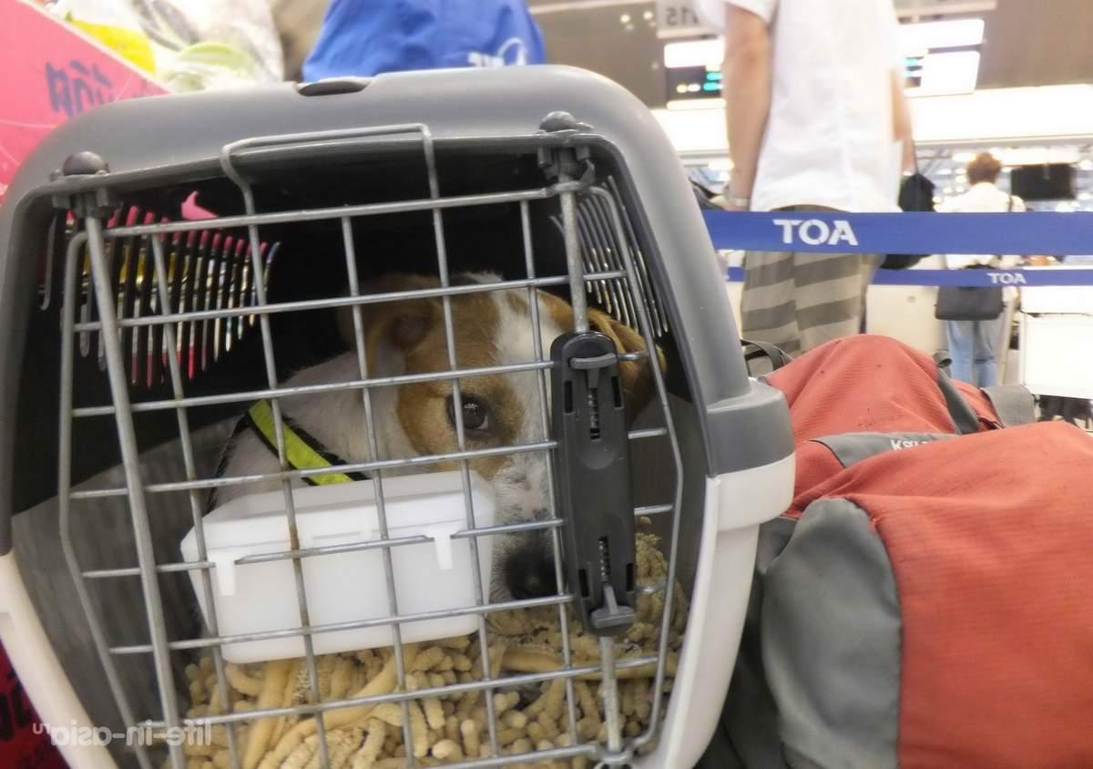 Как перевозить животных в самолете?