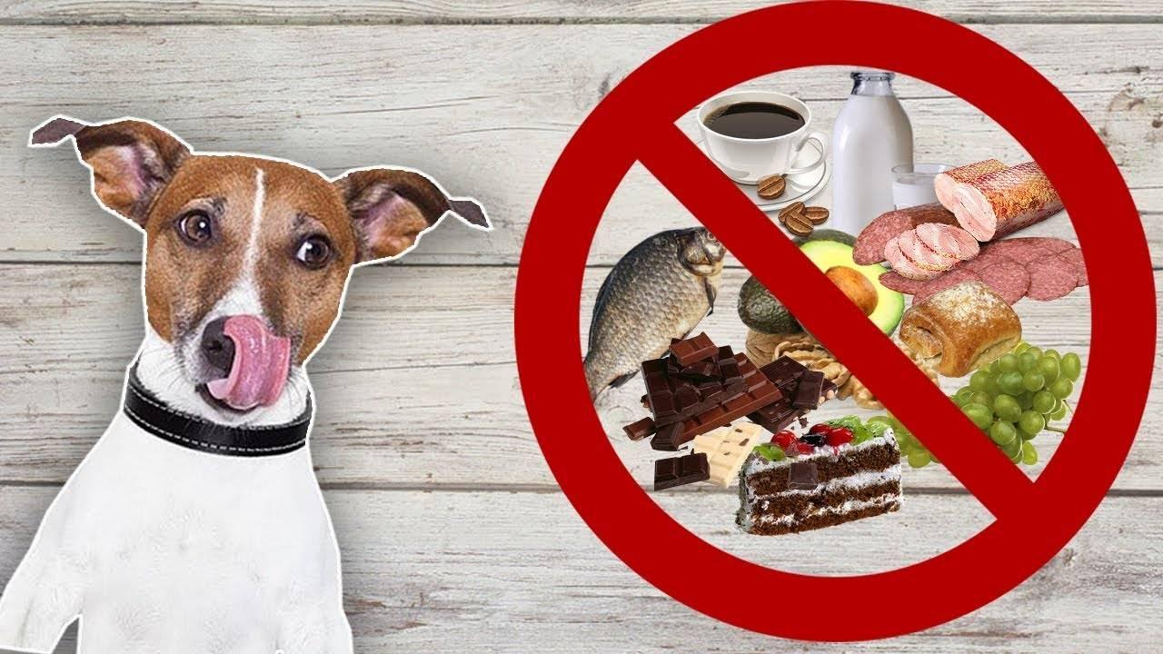 Чем нельзя кормить кошек и собак?