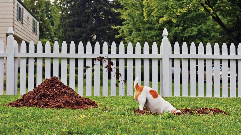 Почему собака ест камни: отвечаем подробно и даем советы
