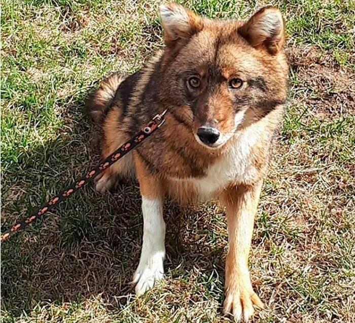Собака сулимова: мама-анархия, папа-стакан портвейна