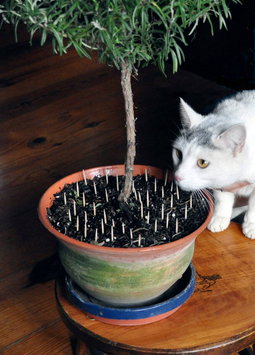7 способов как спасти домашние цветы от кошки, которая постоянно их выворачивает