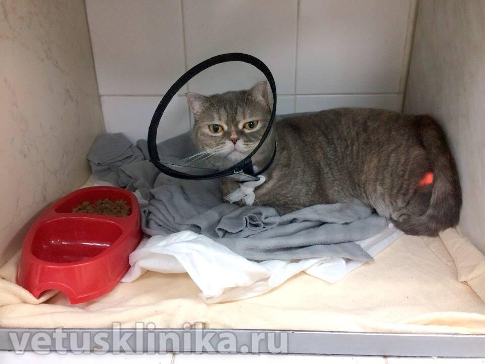Как лечить гастрит у кошки - муркин дом