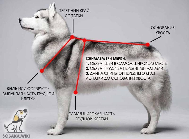 Шлейки для собак: описание видов, как подбирать размер и приучить собаку?