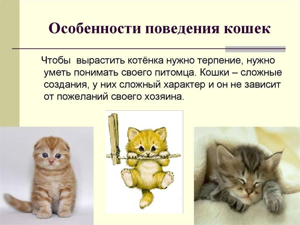 Норма дыхания у кота в минуту. определение состояния кошки