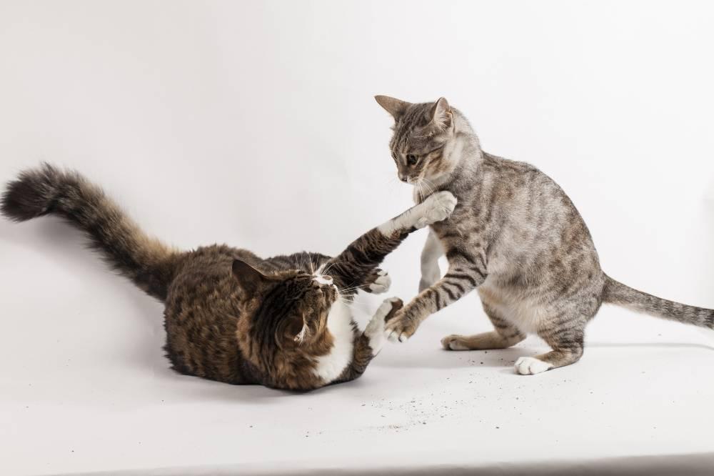 Контроль игровой агрессии кошек
